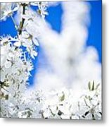 Cherry Blossom With Blue Sky Metal Print