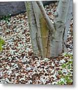 Cherry Blossoms 2013 - 002 Metal Print
