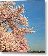 Cherry Blossoms 2013 - 014 Metal Print