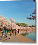 Cherry Blossoms 2013 - 020 Metal Print