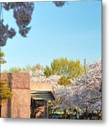 Cherry Blossoms 2013 - 021 Metal Print