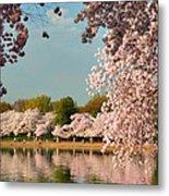 Cherry Blossoms 2013 - 023 Metal Print