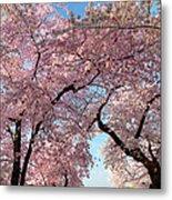 Cherry Blossoms 2013 - 025 Metal Print