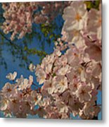 Cherry Blossoms 2013 - 035 Metal Print by Metro DC Photography