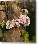 Cherry Blossoms 2013 - 064 Metal Print