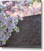 Cherry Blossoms 2013 - 066 Metal Print by Metro DC Photography