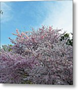 Cherry Blossoms 2013 - 070 Metal Print by Metro DC Photography