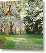 Cherry Blossoms 2013 - 075 Metal Print by Metro DC Photography