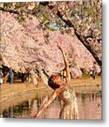 Cherry Blossoms 2013 - 077 Metal Print