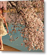 Cherry Blossoms 2013 - 082 Metal Print by Metro DC Photography