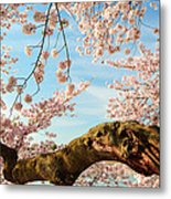 Cherry Blossoms 2013 - 089 Metal Print by Metro DC Photography