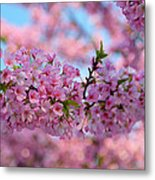 Cherry Blossoms 2013 - 095 Metal Print