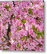 Cherry Blossoms 2013 - 097 Metal Print