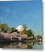 Cherry Blossoms 2013 - 098 Metal Print