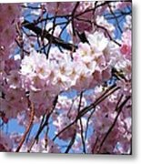 Cherry Blossom Trees Of Branch Brook Park 3 Metal Print
