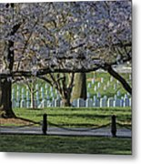 Cherry Blossoms Adorn Arlington National Cemetery Metal Print