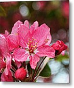 Cherry Blossoms And Greeting Card Blank Metal Print