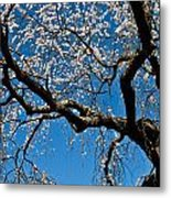 Cherry Blossoms And Sky Metal Print