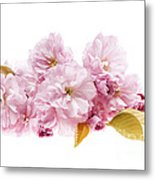 Cherry Blossoms Arrangement Metal Print