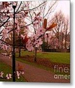Cherry Blossoms At Kirkland In Kendal Metal Print