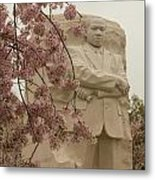 Cherry Blossoms At The Martin Luther King Jr Memorial Metal Print