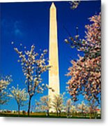 Cherry Blossoms At The Monument Metal Print