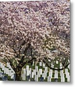 Cherry Blossoms Grace Arlington National Cemetery Metal Print
