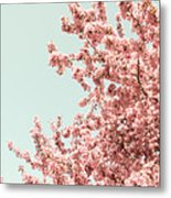 Cherry Blossoms In Spring Metal Print