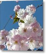 Cherry Blossoms In Spring Xi Metal Print