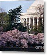 Cherry Blossoms Jefferson Memorial Metal Print