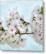 Cherry Blossoms No. 9146 Metal Print