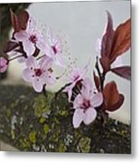 Cherry Blossoms On A Branch Metal Print
