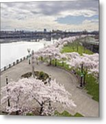 Cherry Blossoms Trees Along Willamette River Waterfront Metal Print