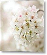 Cherry Blossoms - Washington Dc - 0113101 Metal Print