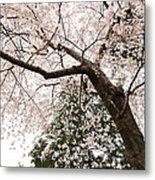 Cherry Blossoms - Washington Dc - 0113115 Metal Print by DC Photographer