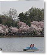 Cherry Blossoms - Washington Dc - 011315 Metal Print by DC Photographer