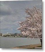 Cherry Blossoms - Washington Dc - 011362 Metal Print by DC Photographer