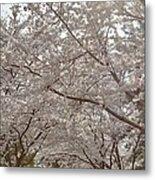 Cherry Blossoms - Washington Dc - 011363 Metal Print
