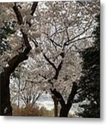 Cherry Blossoms - Washington Dc - 011373 Metal Print by DC Photographer