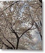 Cherry Blossoms - Washington Dc - 011375 Metal Print by DC Photographer