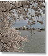 Cherry Blossoms With Jefferson Memorial - Washington Dc - 011320 Metal Print by DC Photographer