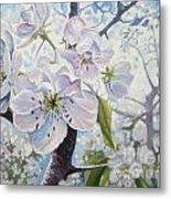 Cherry In Blossom Metal Print