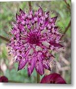Cherry-queen Of The Prairie Flower Metal Print