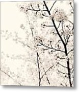 Cherry Tree Blossom Artistic Closeup Sepia Toned Metal Print