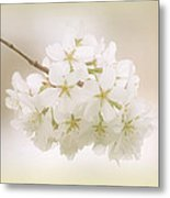 Cherry Tree Blossoms Metal Print by Sandy Keeton