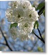Cherry Tree Petals Metal Print