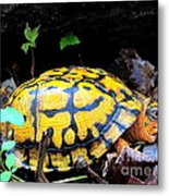 Chesapeake Box Turtle Metal Print