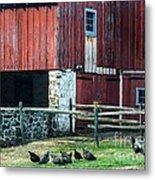 Chester County Chickens Metal Print