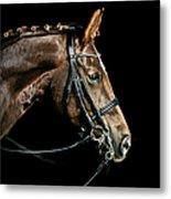 Chestnut Dressage Horse Groomed For A Metal Print