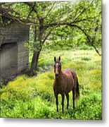 Chestnut Horse In A Sunny Meadow Metal Print